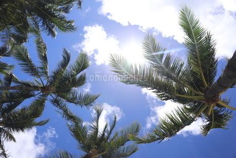 ハワイ オアフ島 ワイキキビーチのヤシの木の写真素材 [FYI01269297]