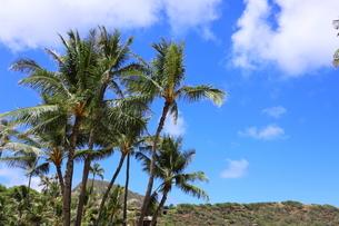 ハワイ オアフ島 ワイキキビーチのヤシの木の写真素材 [FYI01269298]