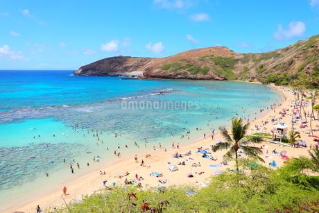 ハワイ オアフ島のハナウマ湾の写真素材 [FYI01269302]