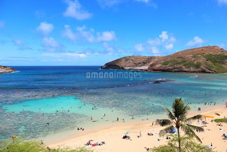 ハワイ オアフ島のハナウマ湾の写真素材 [FYI01269310]