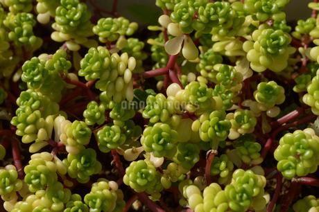 可愛い植物が集合して植えられているの写真素材 [FYI01269362]