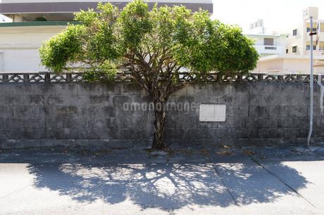 路地裏の壁沿いに育つ植物の写真素材 [FYI01269372]