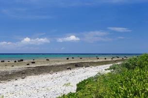 石垣島 白保海岸の写真素材 [FYI01269665]