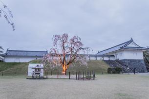 春の山形城跡の二の丸東大手門の風景の写真素材 [FYI01269998]