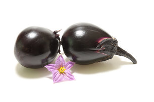 ナスビとナスビの花の写真素材 [FYI01270058]