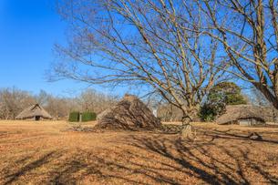 冬の加曽利貝塚の風景の写真素材 [FYI01270082]