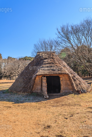 冬の加曽利貝塚の復元された住居の写真素材 [FYI01270087]
