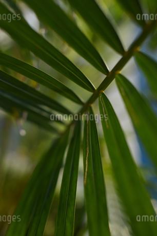 クローズアップした南国沖縄の植物の写真素材 [FYI01270118]
