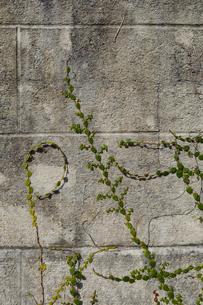 南国沖縄のブロック塀に這うツタの写真素材 [FYI01270126]