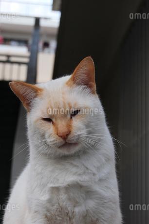 南国沖縄の路地裏で上から睨みつけている猫の写真素材 [FYI01270128]