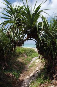 南国沖縄のアダンの向こうにエメラルドグリーンの海の写真素材 [FYI01270171]