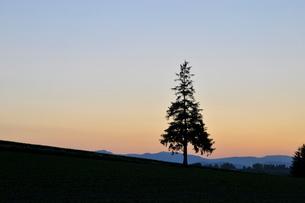 夕焼空と松の木 美瑛町の写真素材 [FYI01270383]