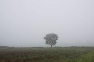 朝霧の高原の写真素材 [FYI01270385]