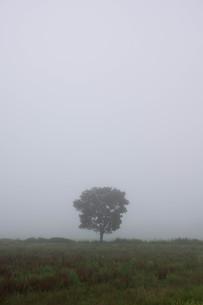 朝霧の高原の写真素材 [FYI01270386]