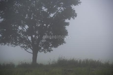 朝霧の高原の写真素材 [FYI01270387]