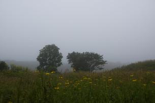 朝霧の高原の写真素材 [FYI01270388]