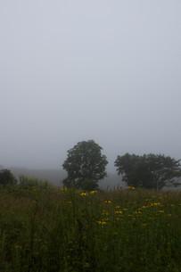 朝霧の高原の写真素材 [FYI01270389]