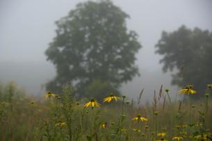 朝霧の高原の写真素材 [FYI01270390]
