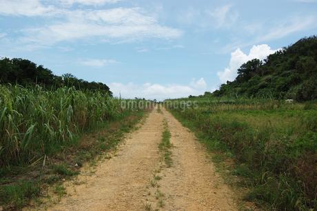 南国沖縄のサトウキビ畑の農道の写真素材 [FYI01270464]