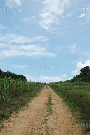 南国沖縄のサトウキビ畑の農道の写真素材 [FYI01270465]