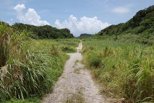 南国沖縄の山へ続く田舎の道の写真素材 [FYI01270467]
