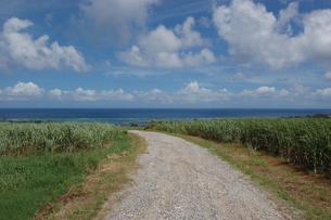 南国沖縄のサトウキビ畑の農道の奥に海が見えるの写真素材 [FYI01270469]