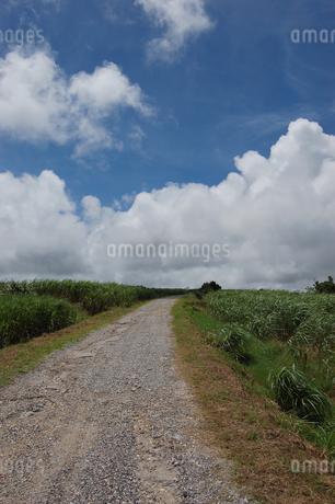 南国沖縄のサトウキビ畑の農道の写真素材 [FYI01270471]