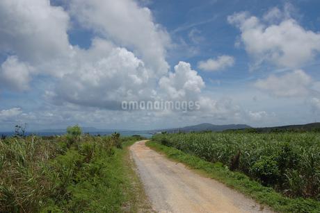 南国沖縄のサトウキビ畑の農道の奥に海が見えるの写真素材 [FYI01270476]