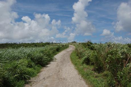南国沖縄のサトウキビ畑の農道の写真素材 [FYI01270477]