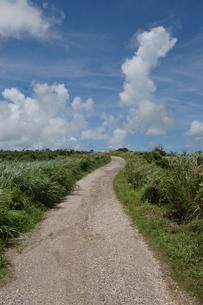 南国沖縄のサトウキビ畑の農道の写真素材 [FYI01270478]