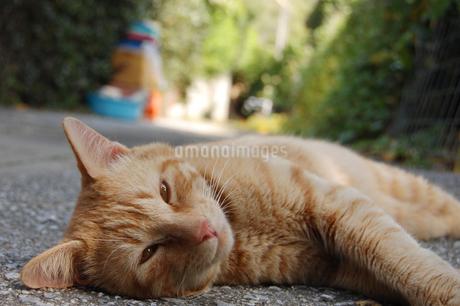 南国沖縄の路上で寝っ転がる可愛い猫の写真素材 [FYI01270523]