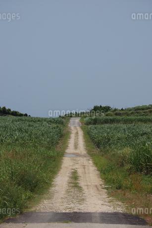 南国沖縄の田舎の一本道の写真素材 [FYI01270535]