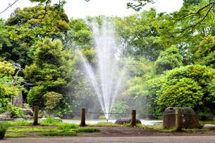 静岡県清水町の柿田川湧水公園の写真素材 [FYI01270801]
