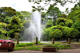 静岡県清水町の柿田川湧水公園の写真素材 [FYI01270802]