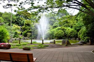 静岡県清水町の柿田川湧水公園の写真素材 [FYI01270809]