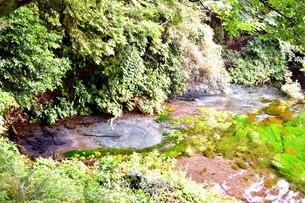 静岡県清水町の柿田川湧水公園の写真素材 [FYI01270811]