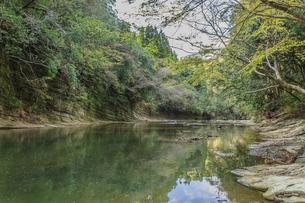 春の養老渓谷の中瀬遊歩道から見た風景の写真素材 [FYI01270819]
