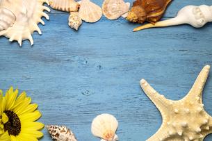 向日葵と貝殻の写真素材 [FYI01270864]