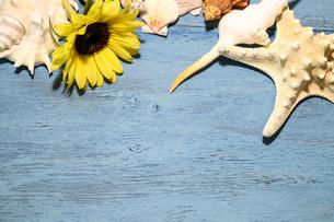 向日葵と貝殻の写真素材 [FYI01270868]