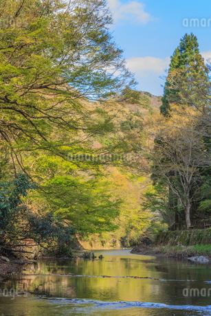 春の養老渓谷の中瀬遊歩道から見た風景の写真素材 [FYI01270912]