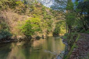 春の養老渓谷の中瀬遊歩道から見た風景の写真素材 [FYI01270948]