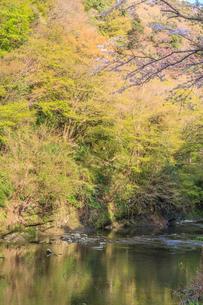 春の養老渓谷の中瀬遊歩道から見た風景の写真素材 [FYI01270959]