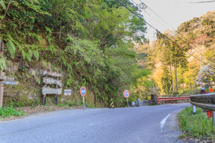 春の養老渓谷の中瀬遊歩道の風景の写真素材 [FYI01270998]