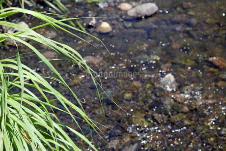 野川の川の流れの写真素材 [FYI01272225]