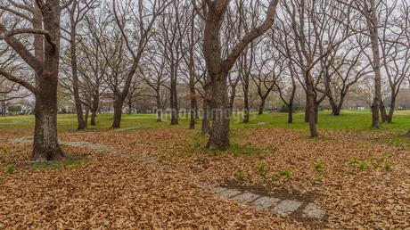 春の加曽利貝塚の風景の写真素材 [FYI01272228]