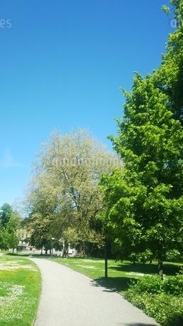 新緑 スイス ザンクトガレンの写真素材 [FYI01272251]