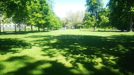 新緑 スイス ザンクトガレン 4の写真素材 [FYI01272254]