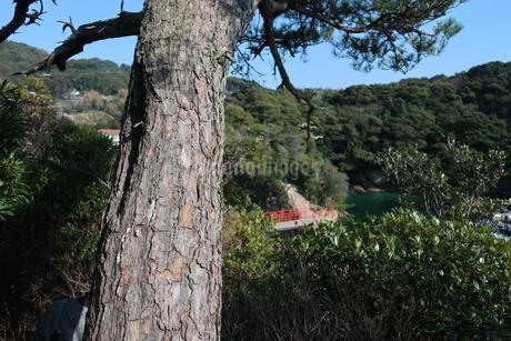 松と海岸沿いの赤い手すりがある参道の写真素材 [FYI01272371]