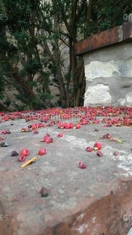 木の実の写真素材 [FYI01273021]