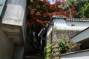 紅葉の小道の階段の写真素材 [FYI01274033]